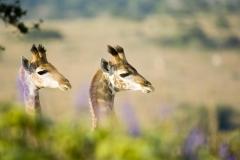 Girafe twins